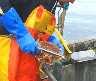 SeafoodScotland
